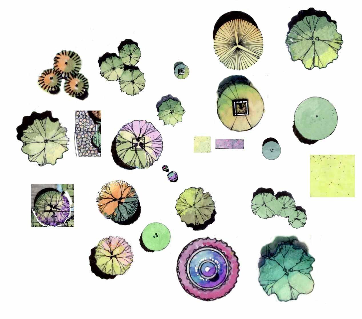 手绘植物平面.jpg