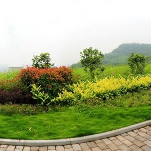 鲜花小镇,重庆涪陵区这个镇建得很有特色